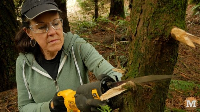 Cutting cedar branches with a recip saw
