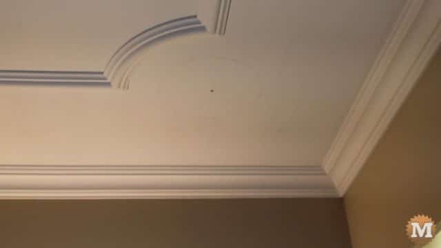 Decorative Ceiling Trim - ash vacuum review