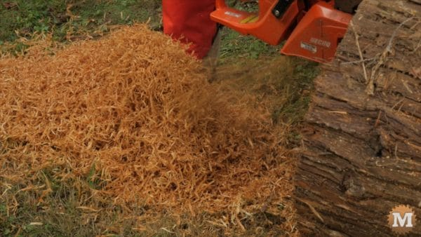 Ribbons of red cedar wood fly off the chainsaw