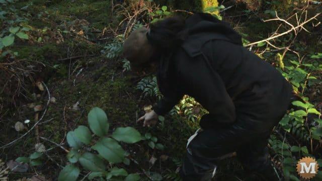 Wild Mushroom foraging